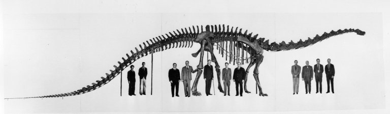 Articulated Diplodocus with Staff