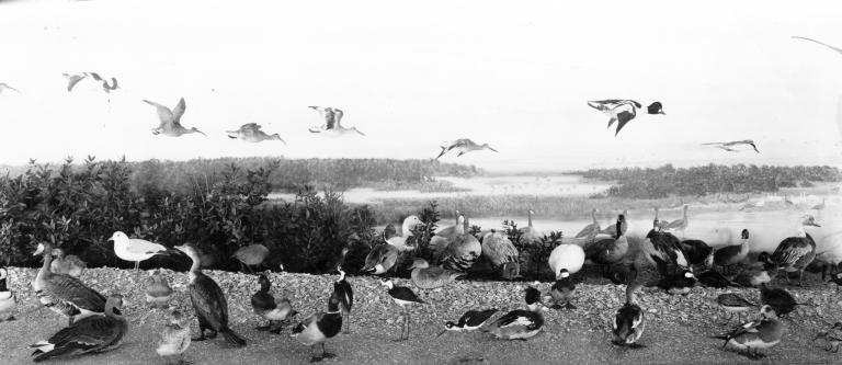 Ptamigan Bird group