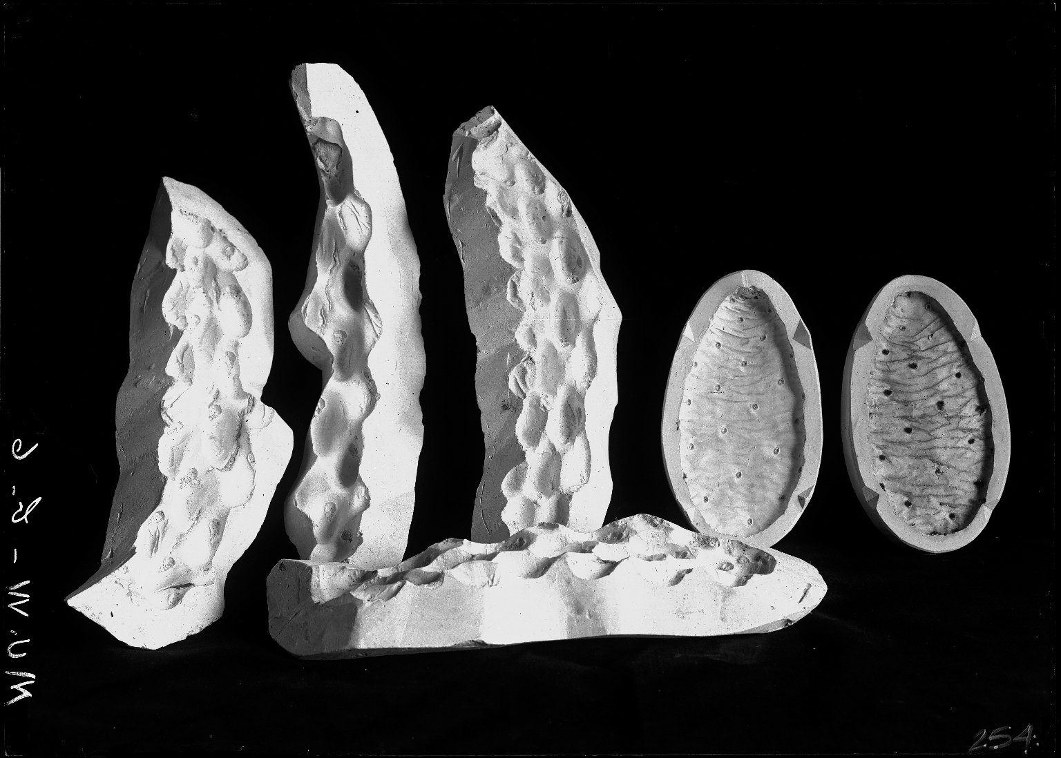 Moulds for cacti