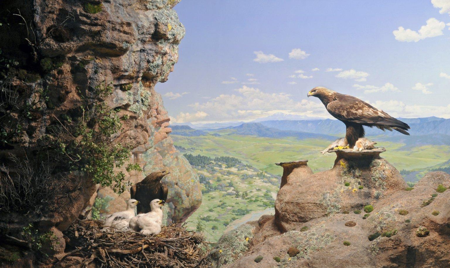 Golden Eagle Diorama