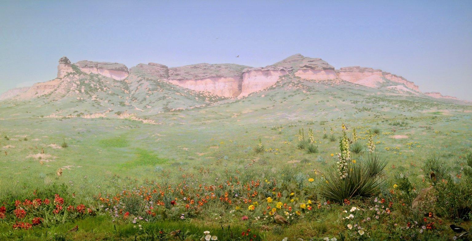 Plains Grassland Diorama