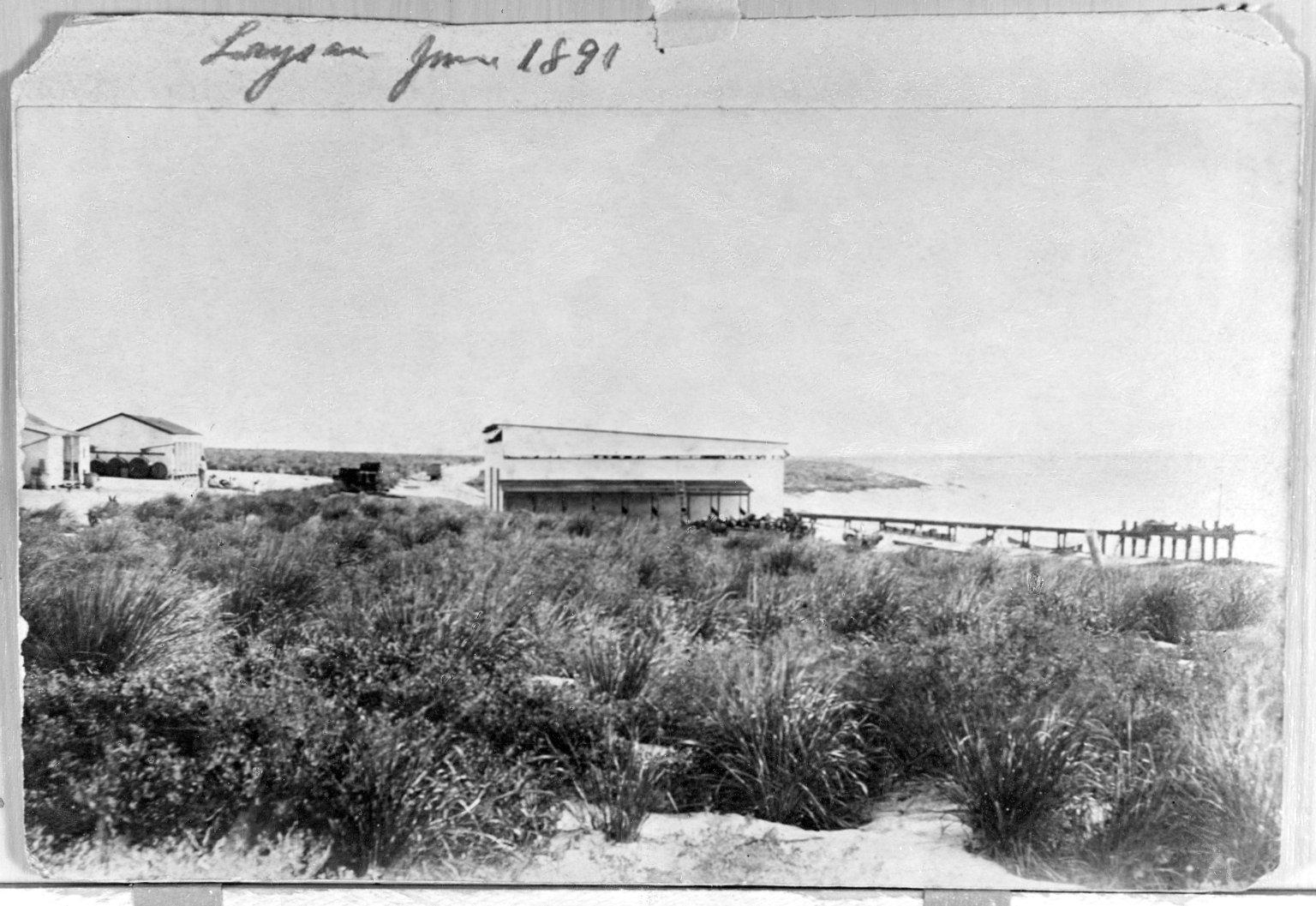 Laysan Island 1891