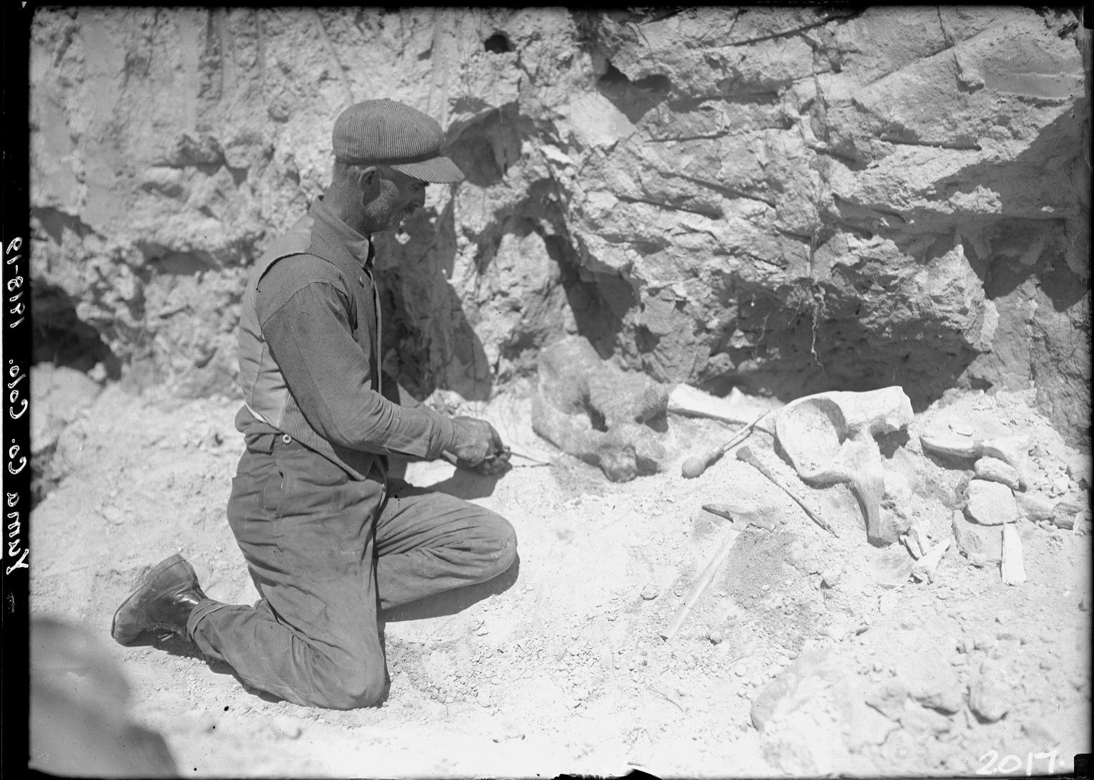 Worker digging fossils at Yuma County expedition site