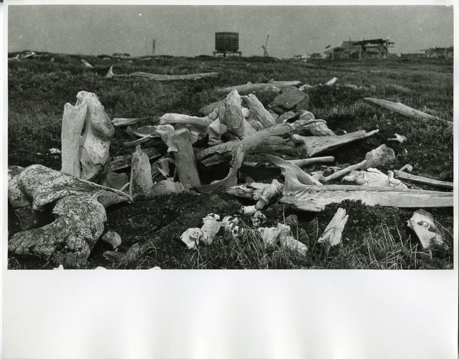 Site of Ancient Igloos on St. Lawrence Island, Alaska