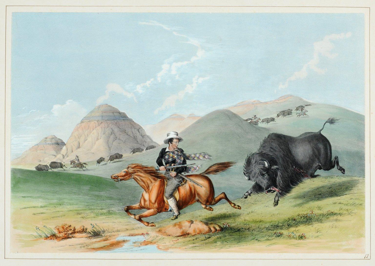 "Buffalo Hunt. ""Chasing Back""."