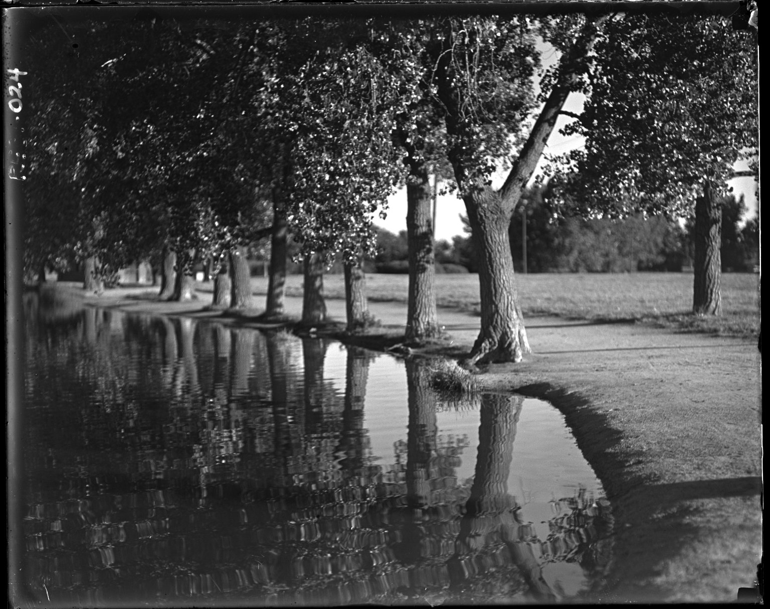 Row of Cottonwoods and Reflections