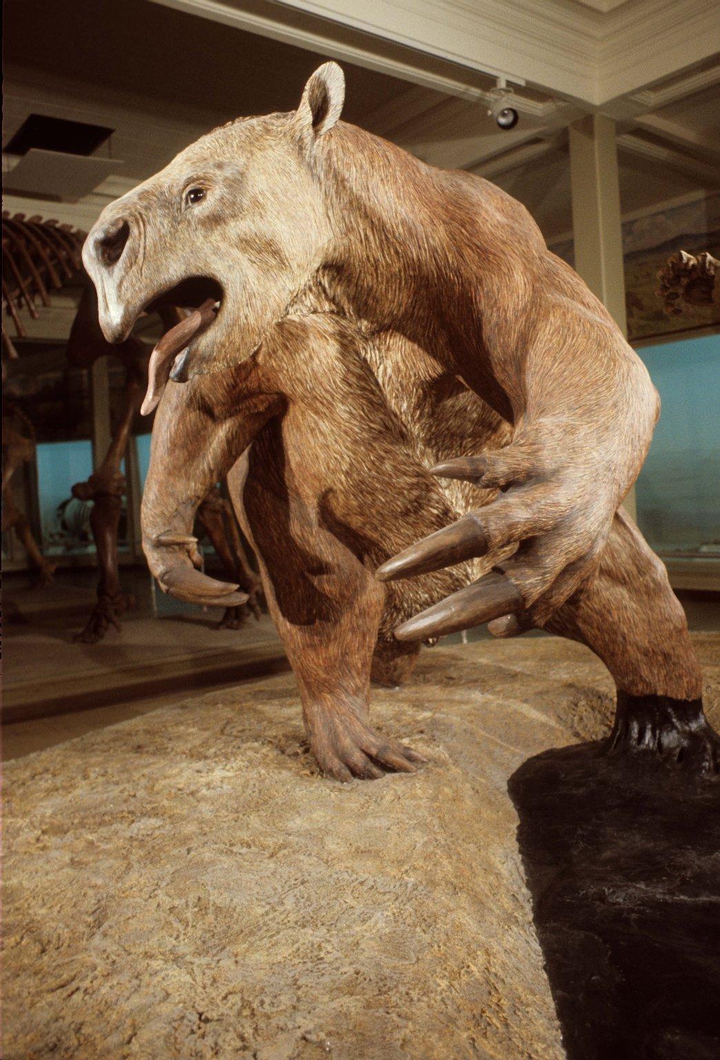 Giant Sloth from La Brea Tar Pit exhibit