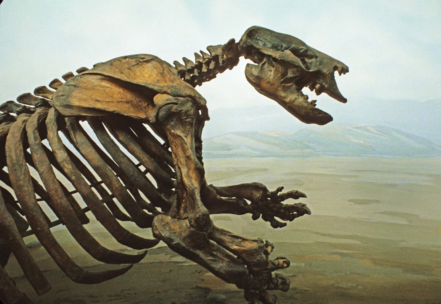 Giant Sloth Articulated Skeleton