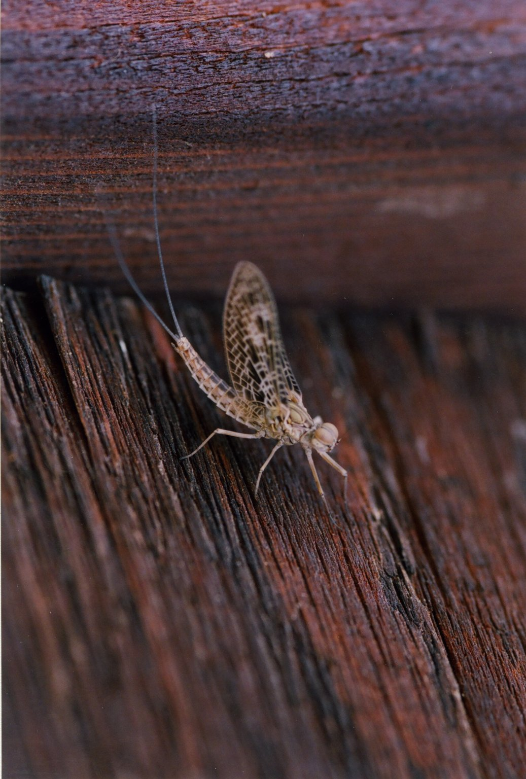 Close up of unidentified insect on wood