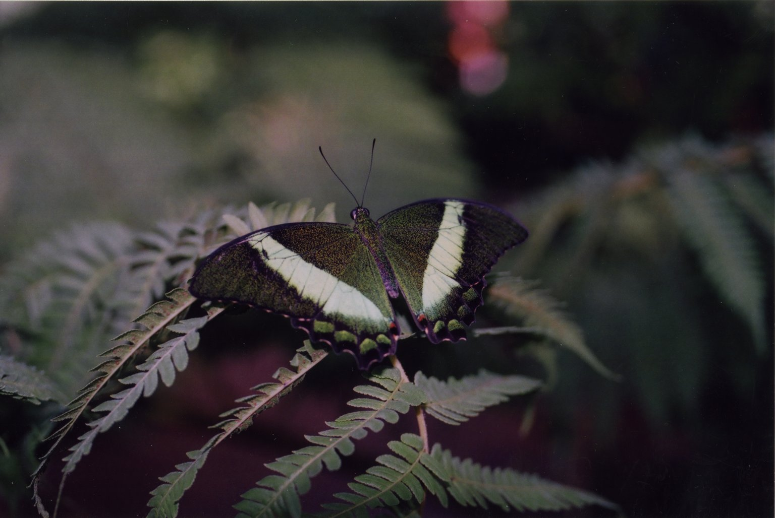 Close up of green and white butterfly on green leaves