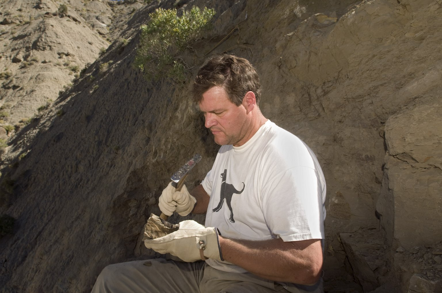 Dr. Kirk Johnson, DMNS Vice President of Research and Collections and Chief Curator, uses a rock hammer to unveil more of a leaf specimen on the Kaiparowits Plateau.