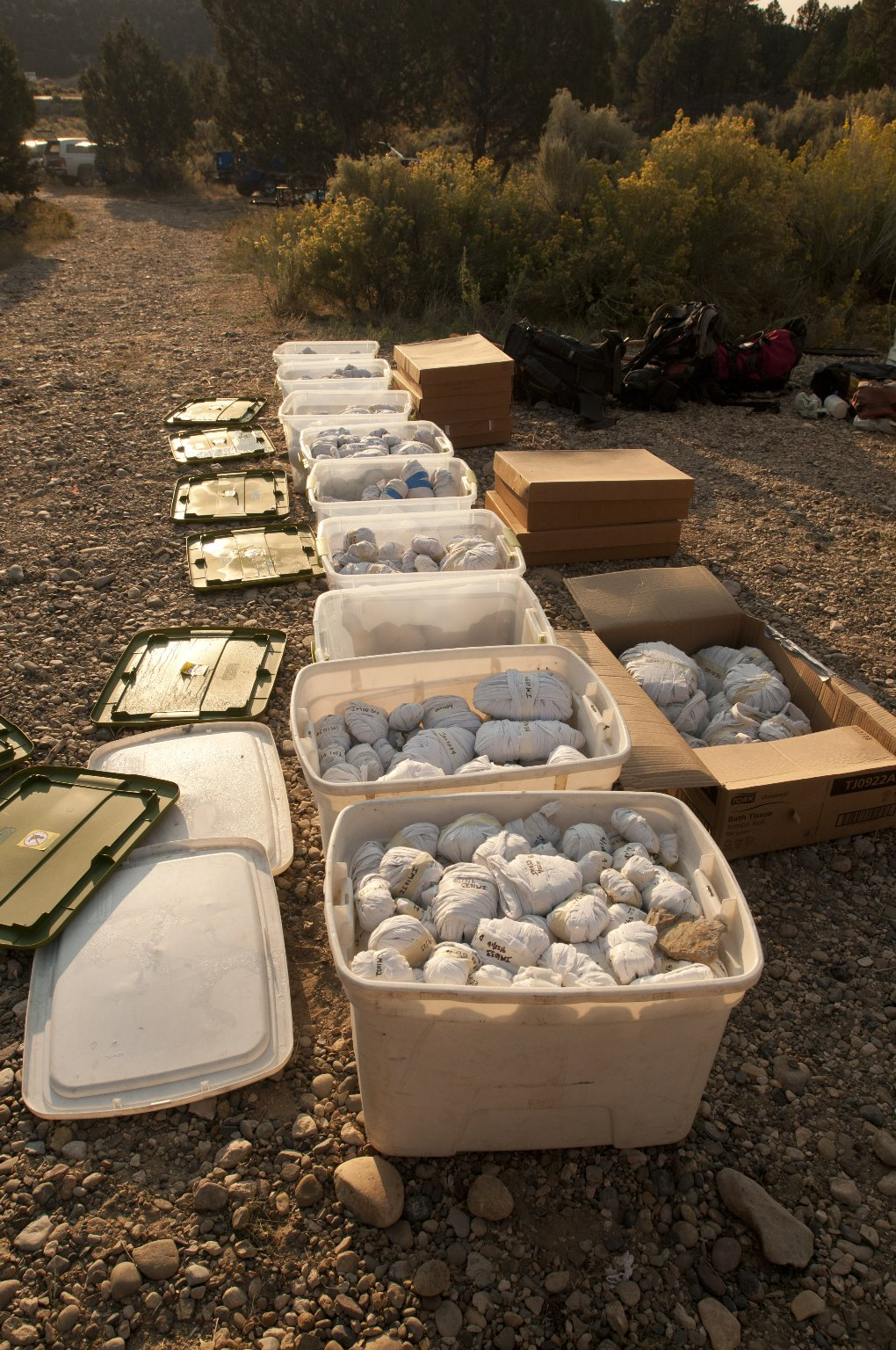 Bins holding collected specimens are lined up for their return to the Denver Museum of Nature and Science.