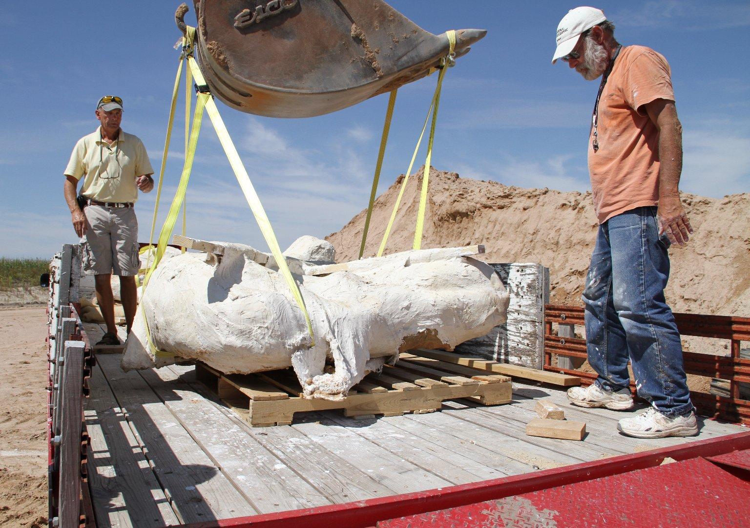 Stegomastodon excavation