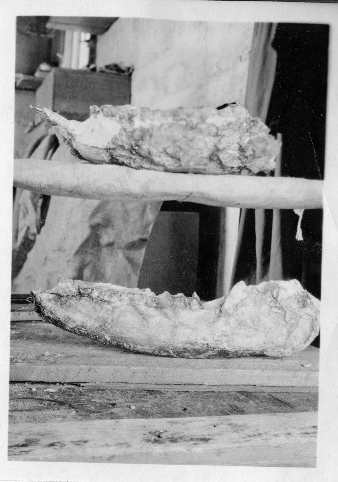 Jawbone Fossil, Horsetail Creek Excavation