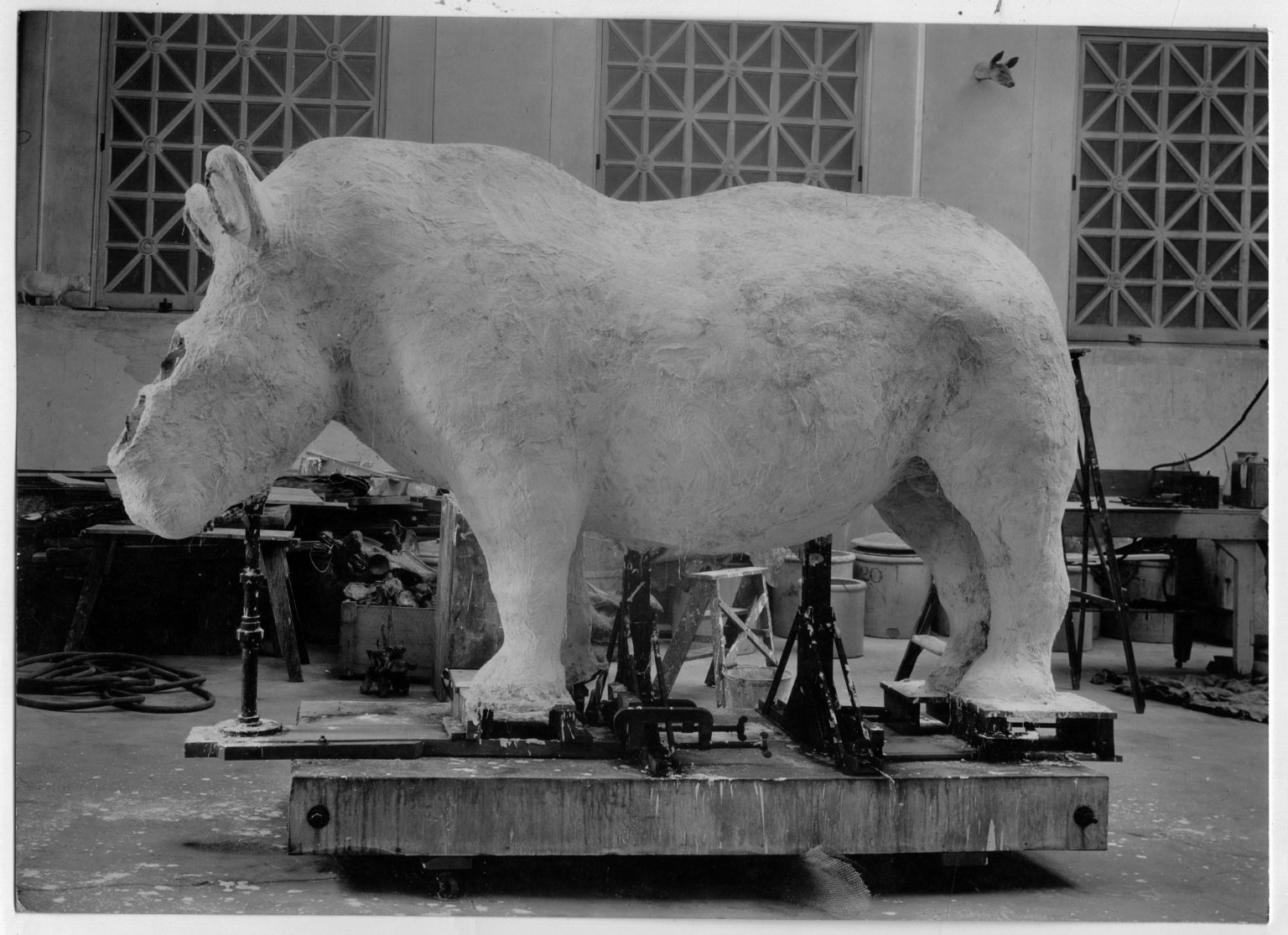 Complete plaster rhinoceros mold The Field Museum