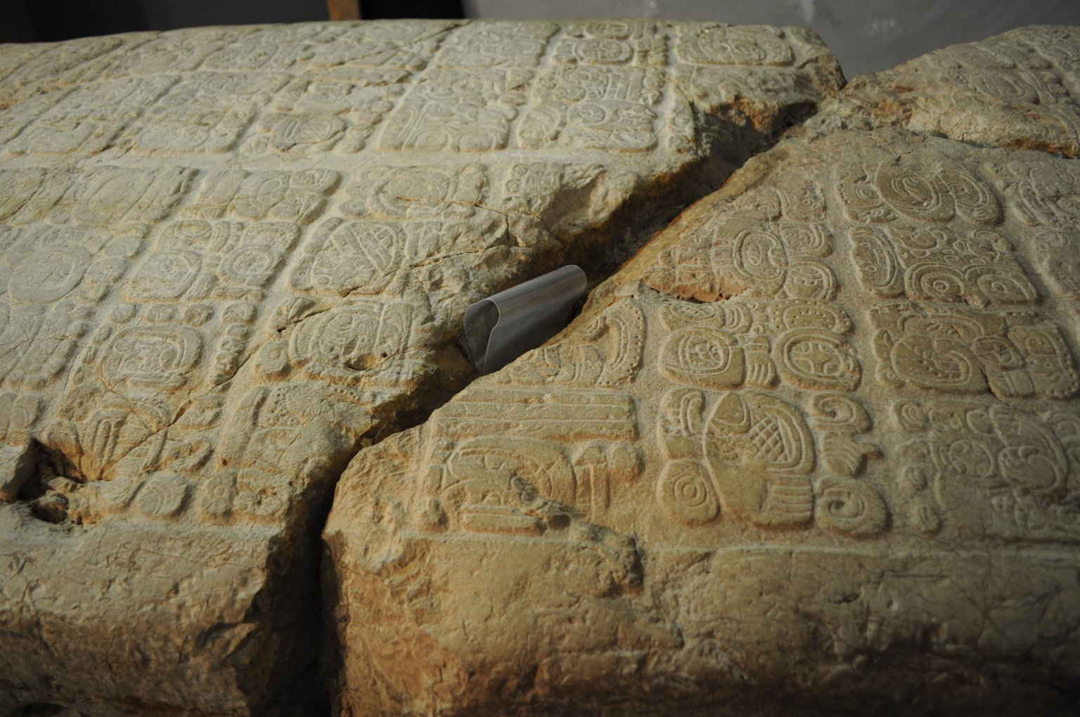 Mark Levine examines the limestone stela from Caracol, Belize, catalog # A1038.1