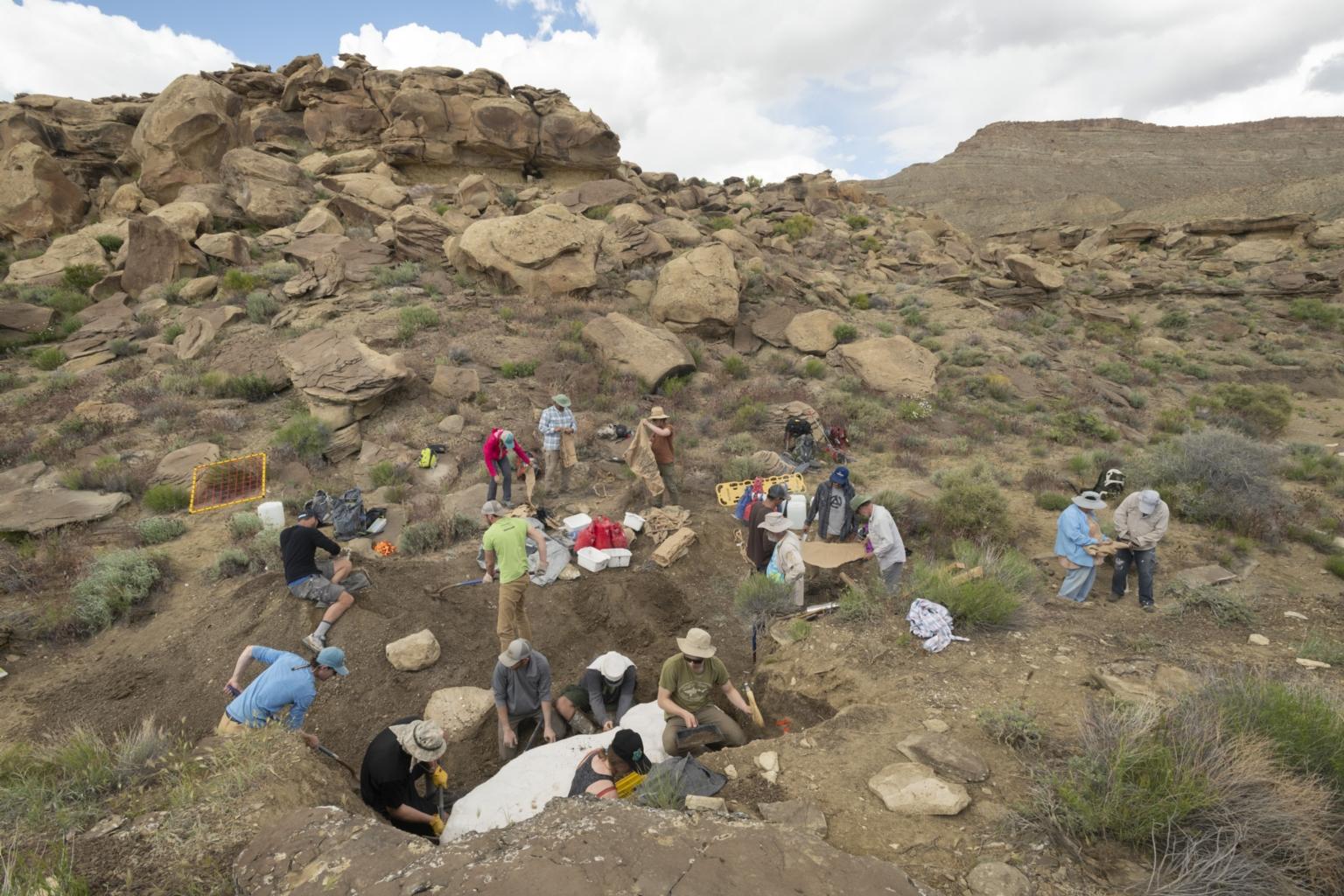 Excavating Hadrosaurus with Dr. Joe Sertich in Grand Staircase Escalante, Utah