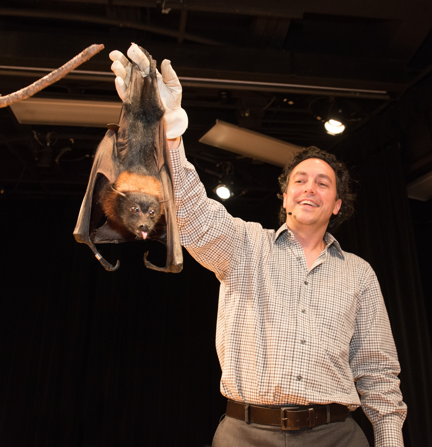 Education Program, Live Bat Demonstration