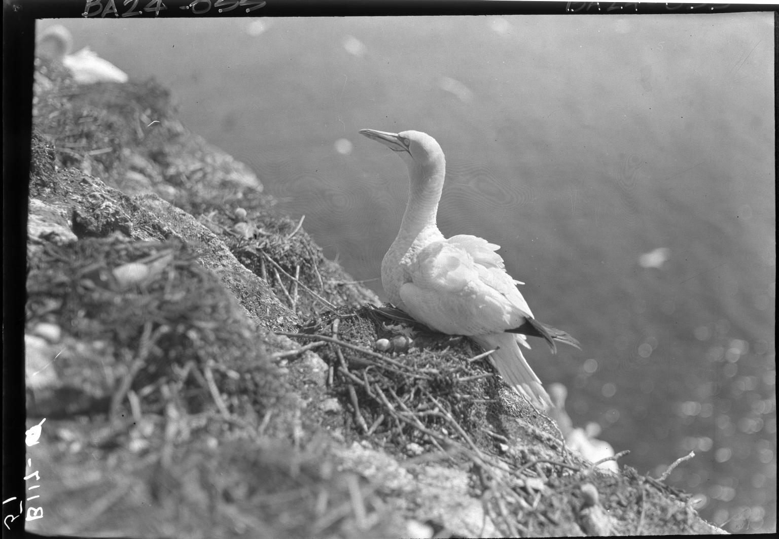 Fieldwork on Bonaventure Island
