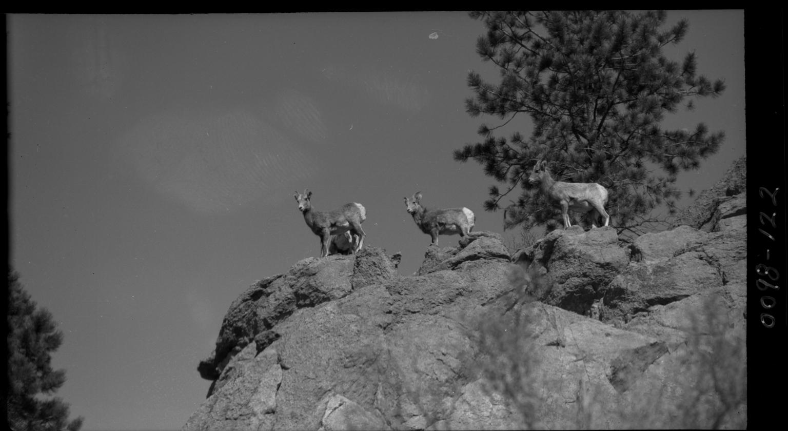 Fieldwork in Colorado