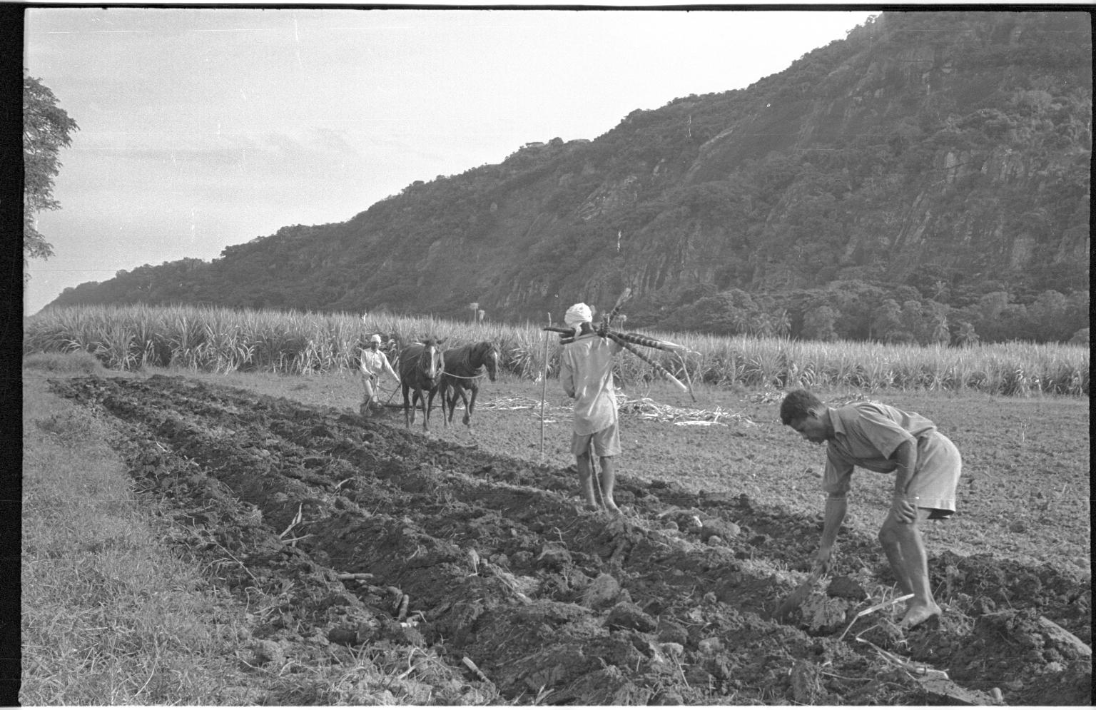 Fieldwork in Fiji