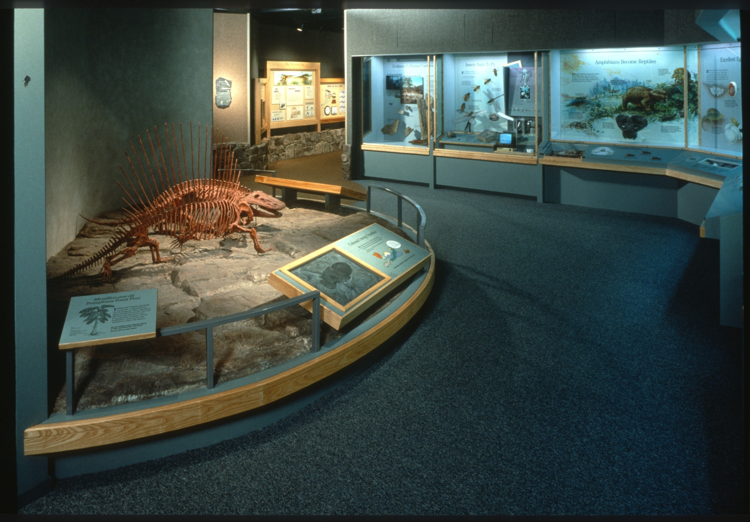 "Gallery & exhibit cases in ""Forest and Flight"" within Prehistoric Journey Exhibit."