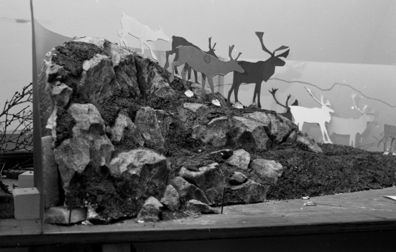 Moose-Caribou diorama preparation and construction