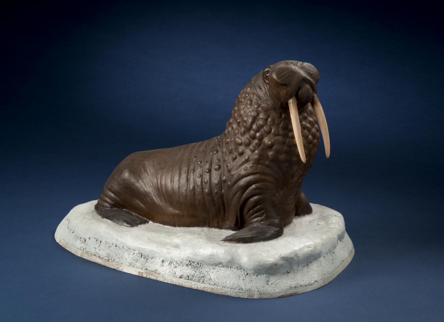 Bull Walrus
