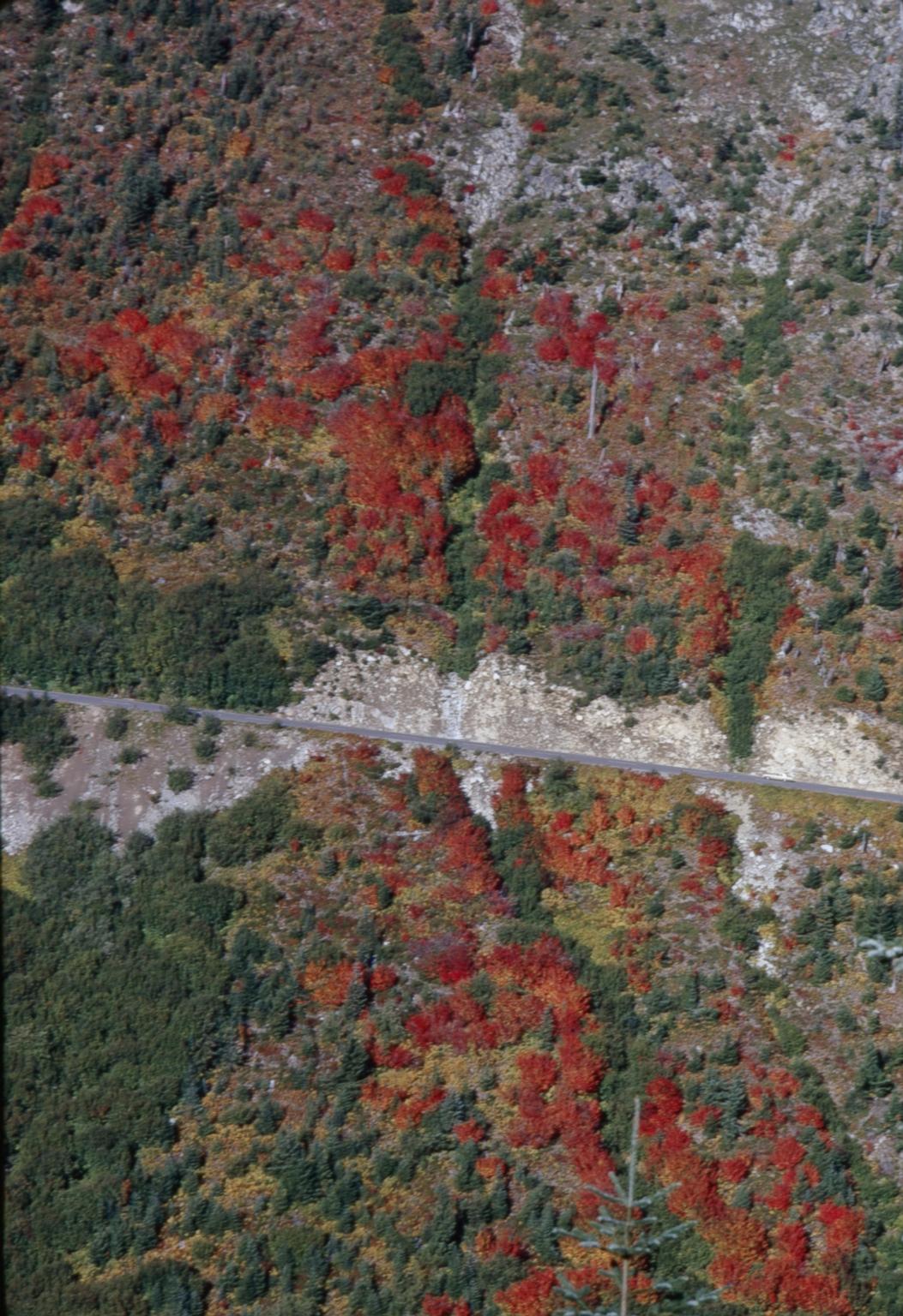 Fall foliage in Mount Rainier National Park