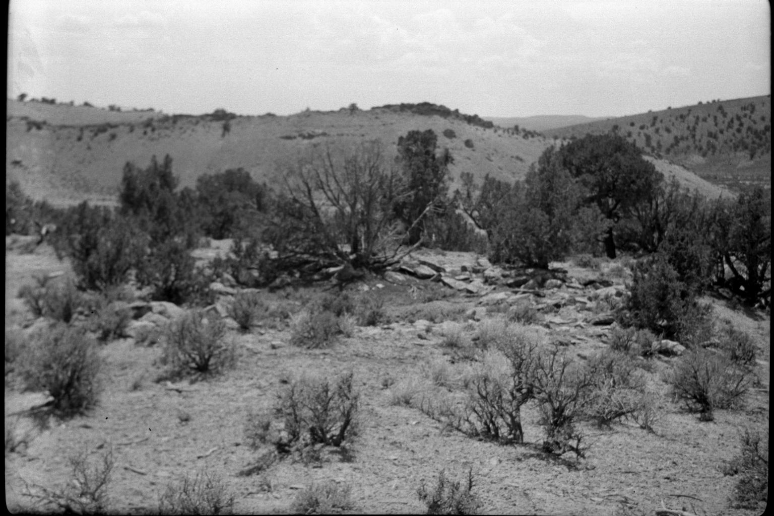 Desert foliage surrounding an archaeological site