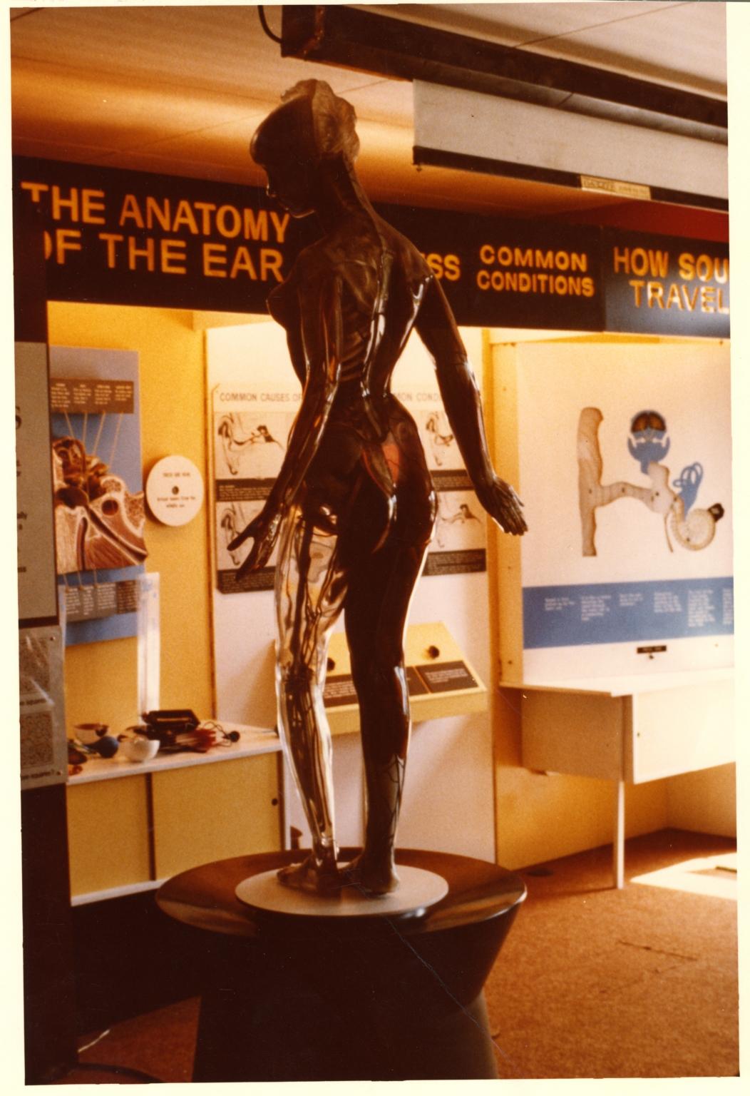 HOL Transparent Anatomical Mannequin