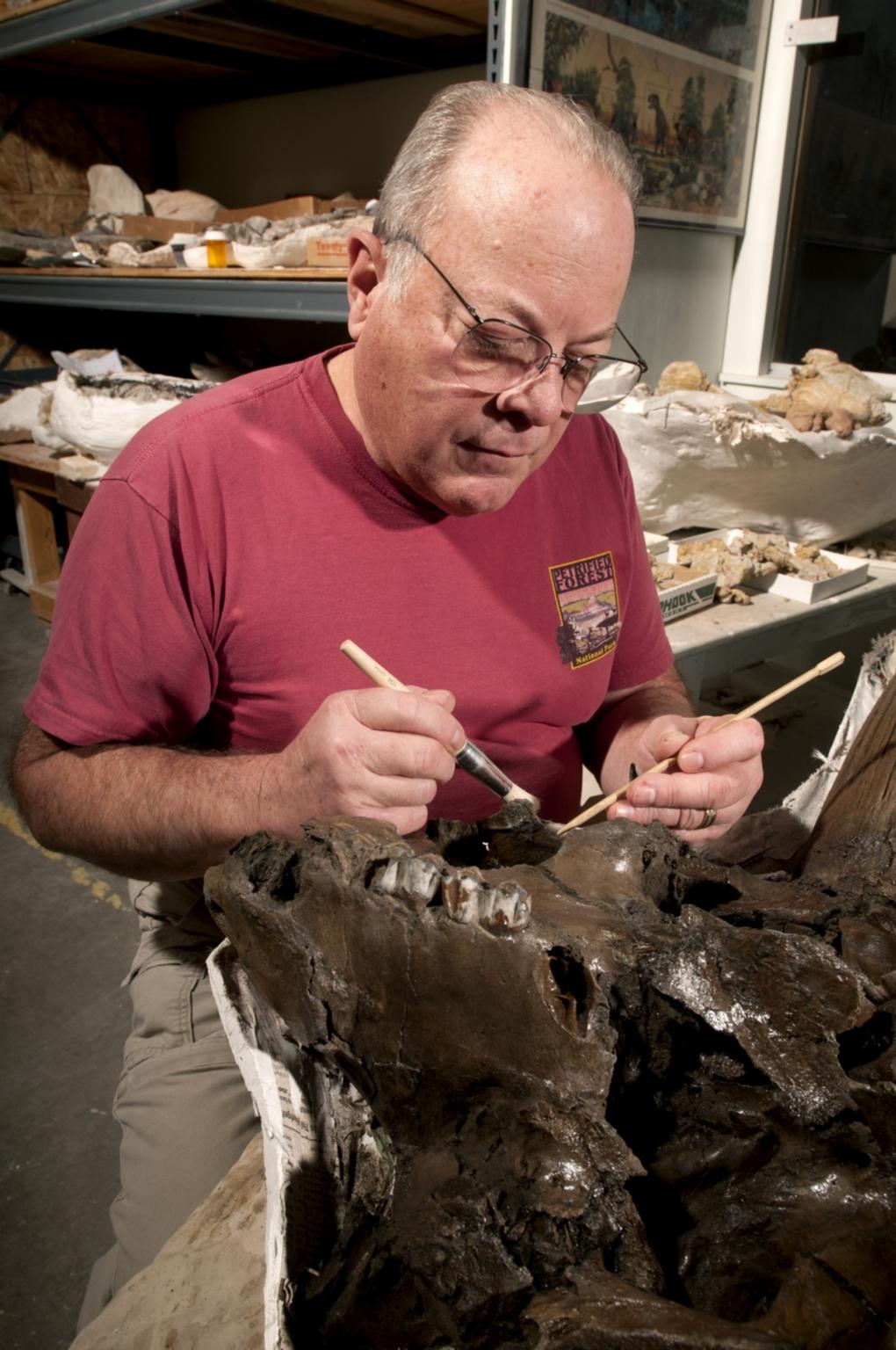 Working on a Bison Jaw from Snomastadon Excavation in Paleo Lab